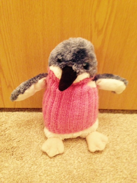 Penguin from Philip Island, Australia