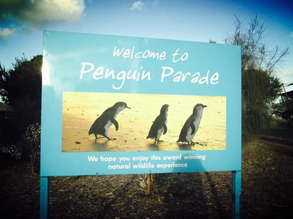 Penguin Parade on Philip Island, Australia