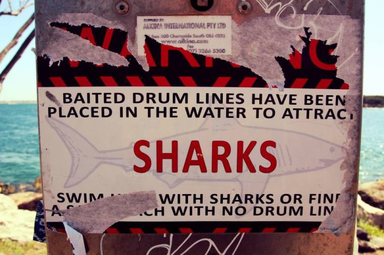Watch out for sharks on the Southport Spit, Australia