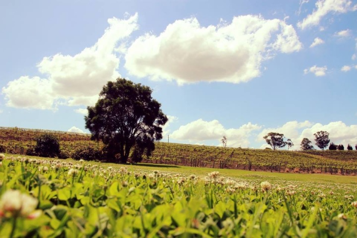 The Hunter Valley, Australia