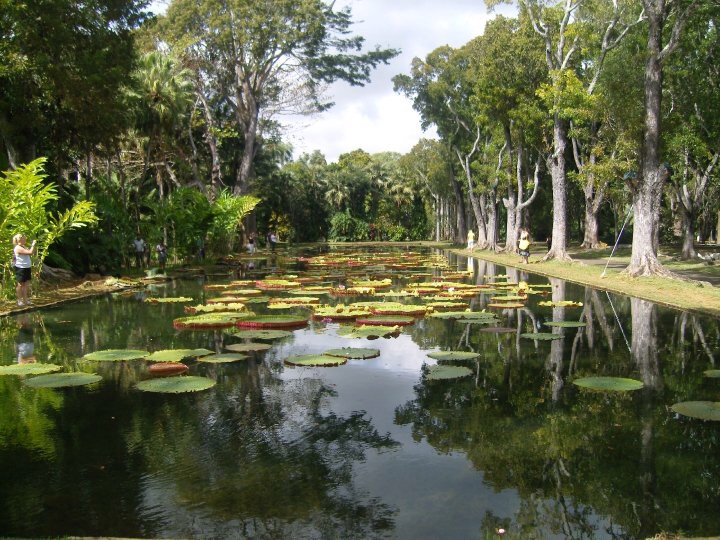 Lilly pond in Pamplemousse Botanical Gardens, Mauritius