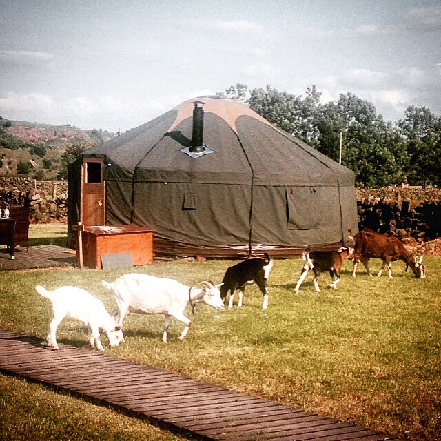 Yurt at Secret Cloud House Holidays Glamping site