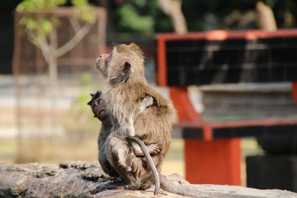 Mum & baby at the Alas Kedaton Monkey Forest
