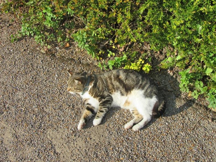 Riley The Cat at Jesmond Dene House