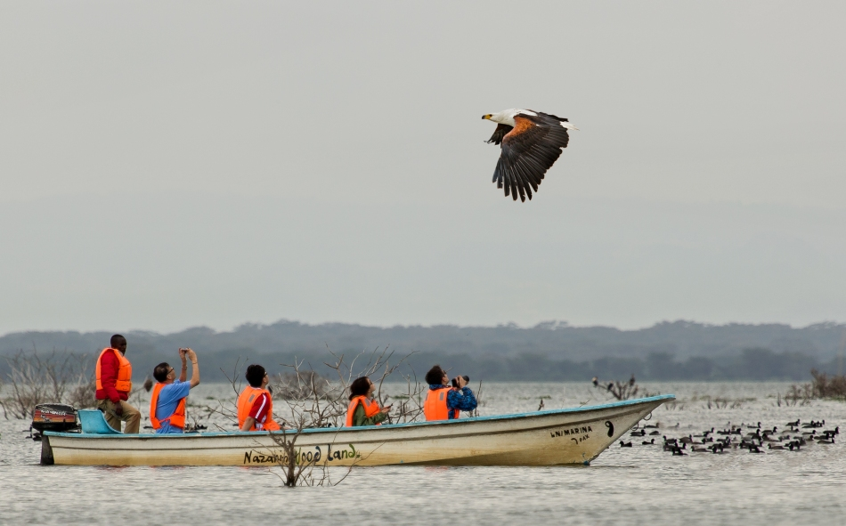 An African Fish Eagle flies over a boat load of tourists at Lake Naivasha in Kenya