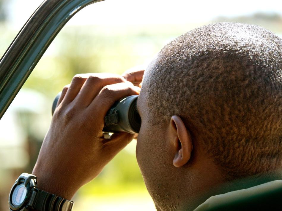 Guide with Binoculars