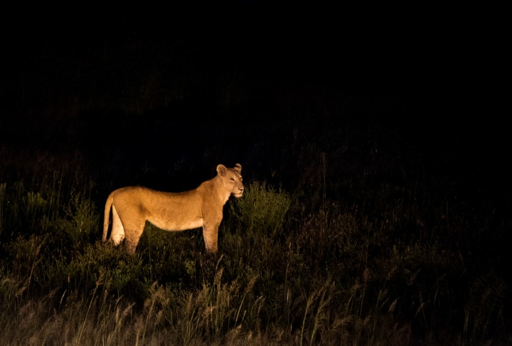 You could be lucky and spot some exciting nocturnal activity
