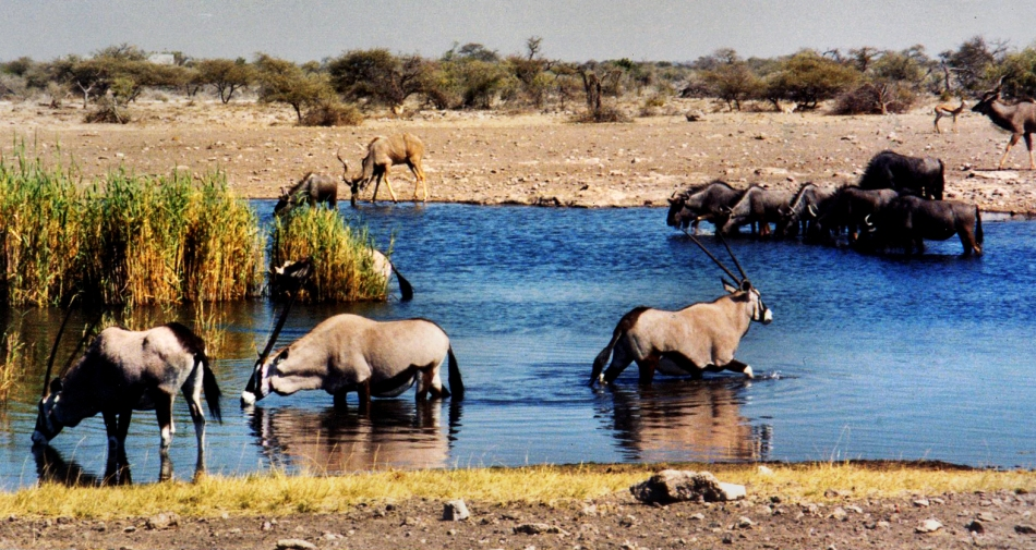 Water hole at the Namutoni Campsite, Namibia