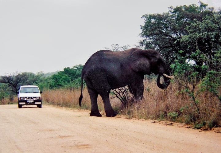Private Car in Kruger National Park, South Africa