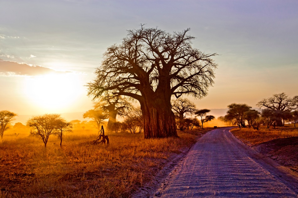 Sunset in Tarangire, Tanzania