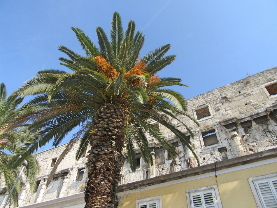 Palm trees & beautiful architecture, the perfect combination in Split, Croatia