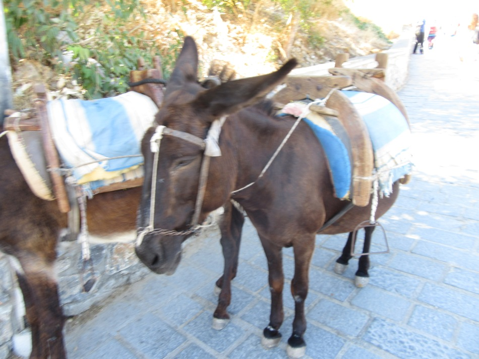 Donkey in Lindos, Rhodes