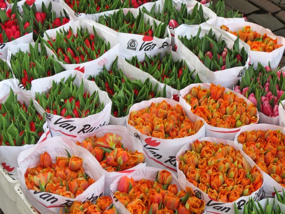 Flower Market in Utrecht, The Netherlands