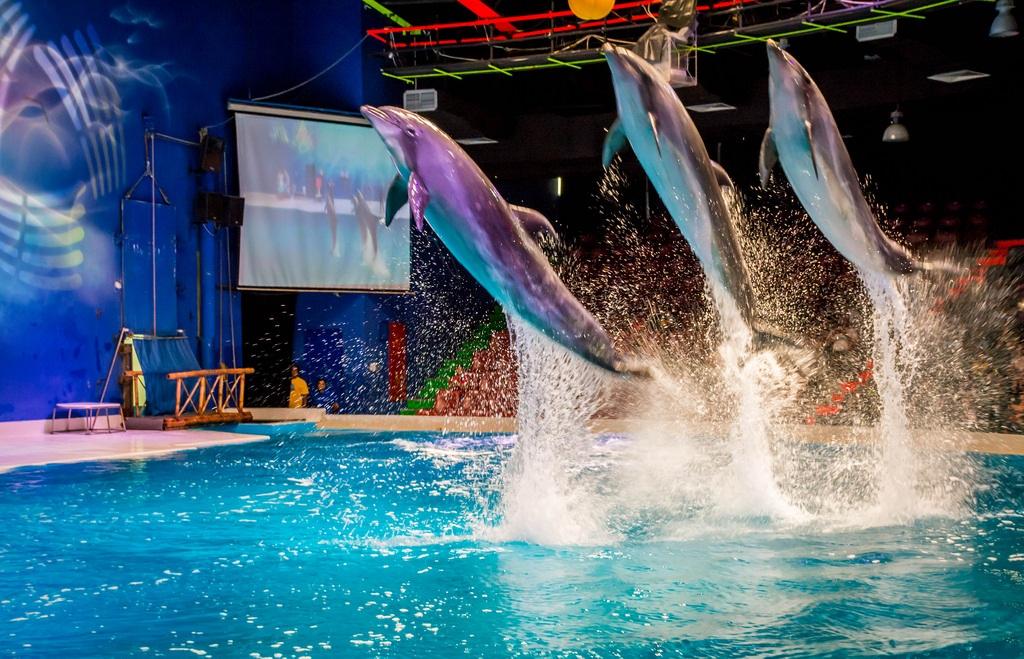 Dubai Dolphinarium, Dubai