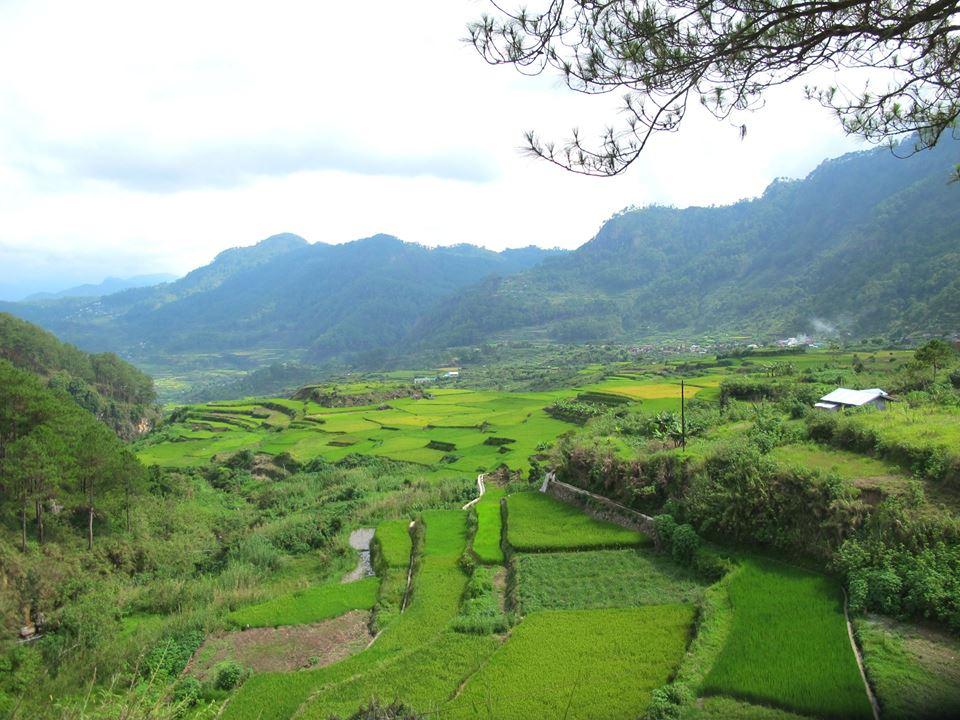 Rice Terraces, Sagada, Philippines