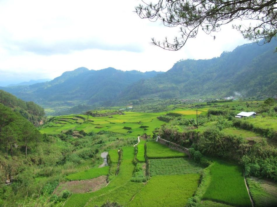 Rice Terraces, Sagada, Philippines