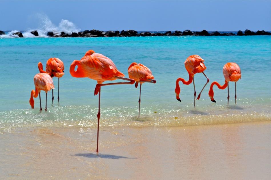Aruba Flamingos Renaissance Island