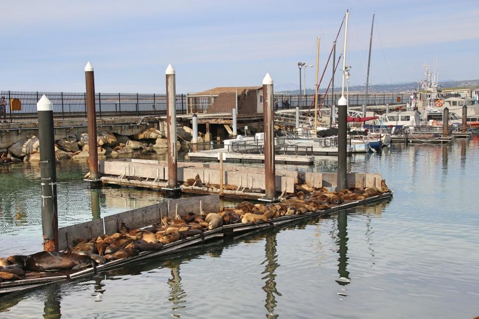 Sea Lions in Monterey, California