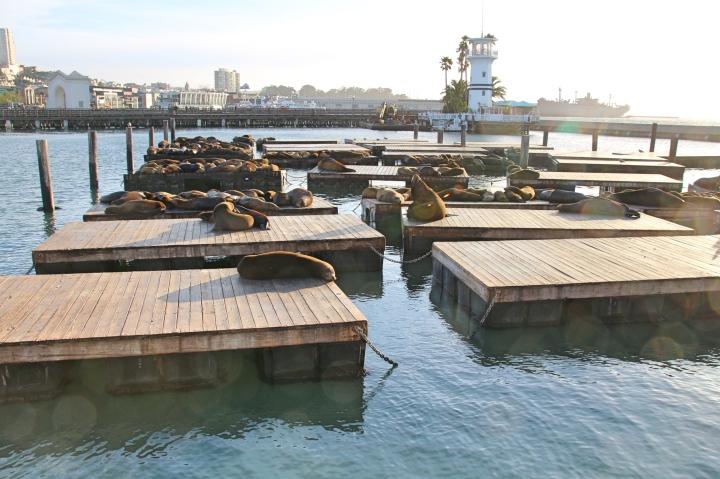 Sealions at Pier 39, San Francisco, USA