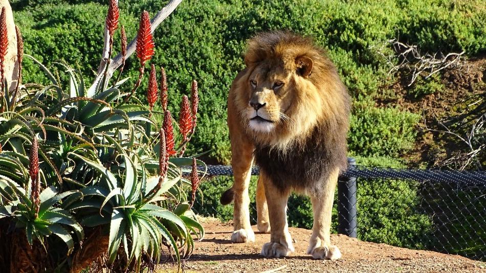 Melbourne Zoo, Australia