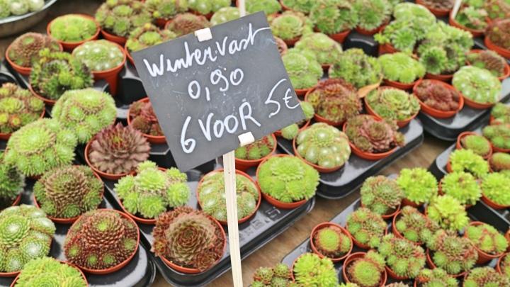 Plants at the Flower Market, Ghent, Belgium