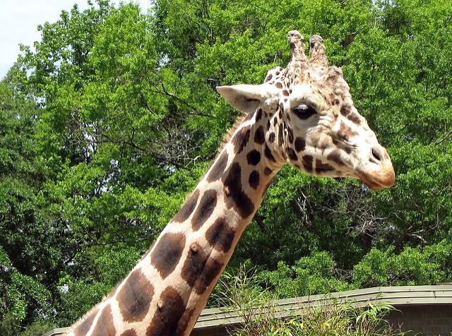 Birmingham Zoo, Alabama, USA