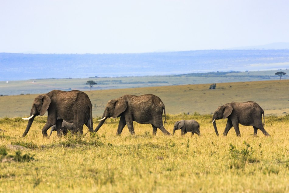Ultimate Safari - Luxury Travel